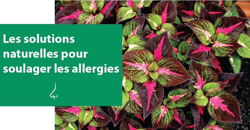 Les solutions naturelles pour soulager les allergies